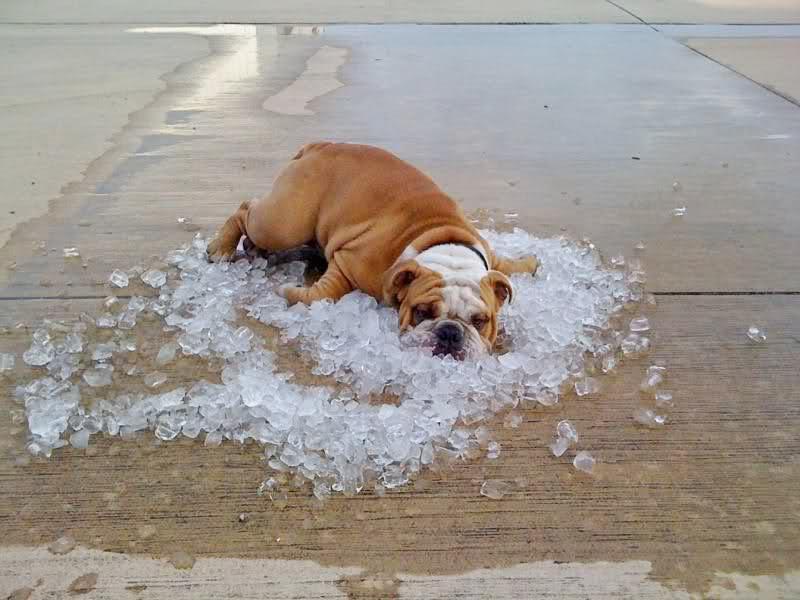 ФОТО: Високите температури предизвикуваат стрес и кај животните