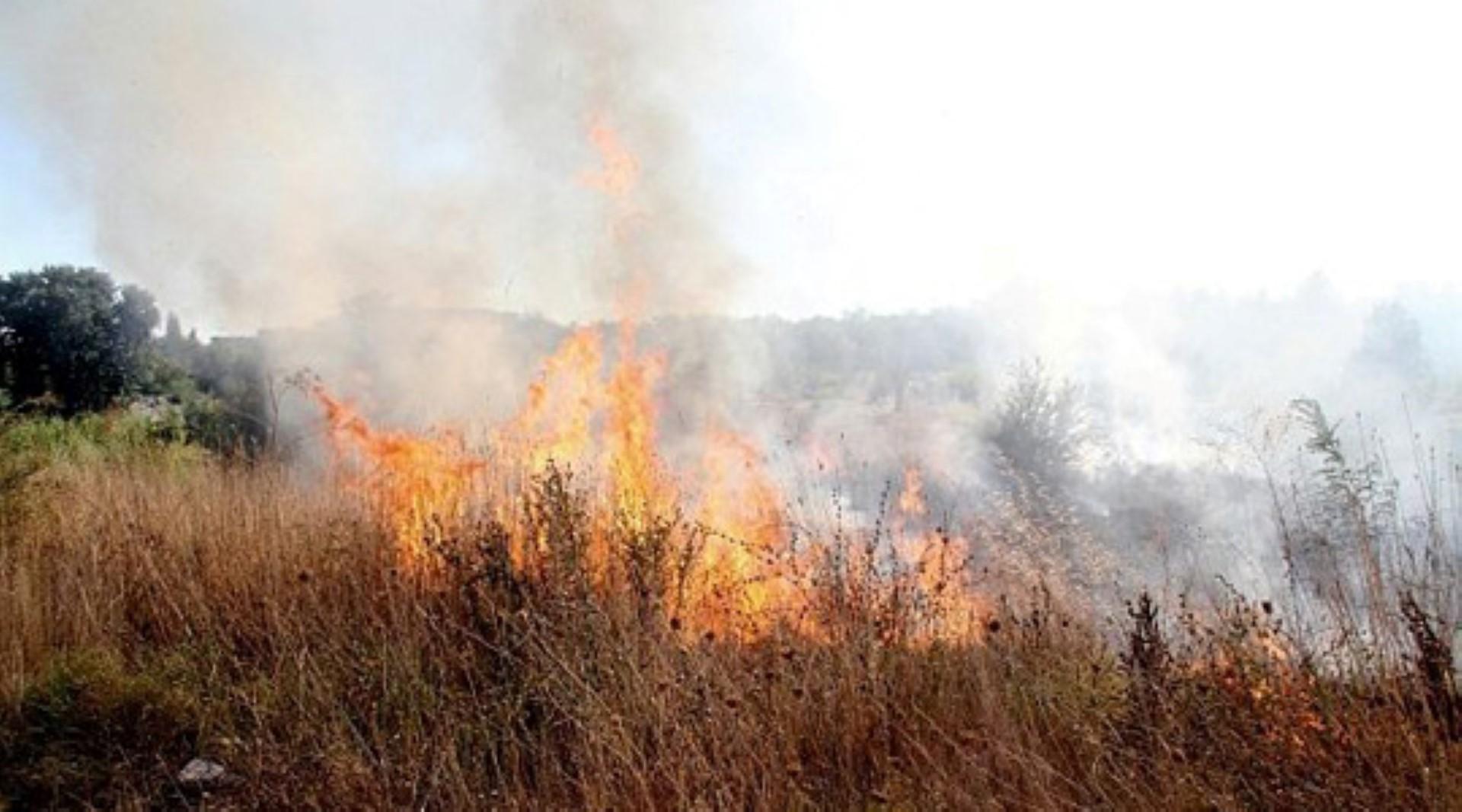 Голем шумски пожар во Кумановско