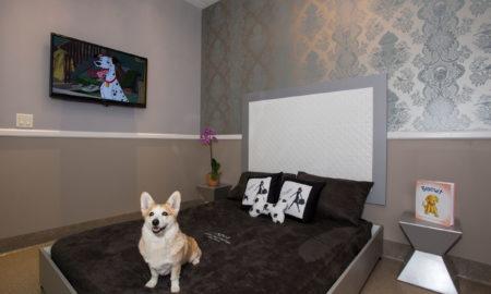 Се отвора првиот хотел со 5 ѕвезди за кучиња и мачки
