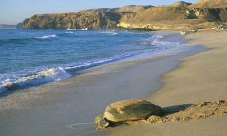 ОМАН: Земја со 2.700 километри прекрасни плажи (ФОТО)