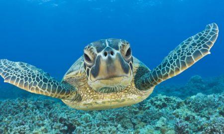 """Морска желка """"шверцувала"""" 800 килограми кокаин"""