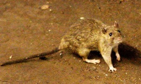 Наезда на стаорци во Париз